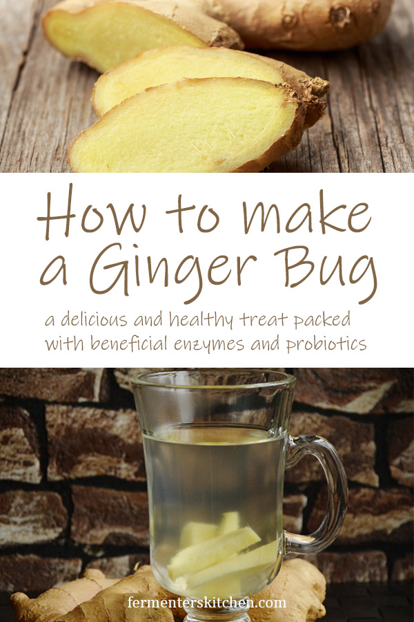 ginger bug recipe how to make ginger bug a delicious and healthy treat with beneficial enzymes and probiotics