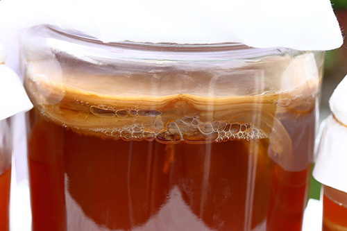 uses for extra Kombucha SCOBY
