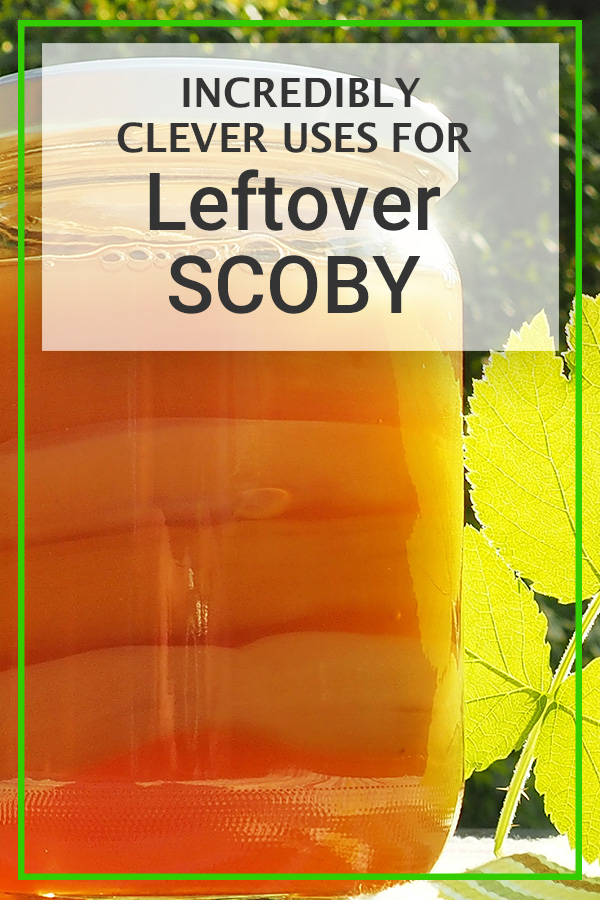 clever uses for leftover scoby
